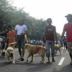 Ilustrasi anjing kesayangan dan pemiliknya (JIBI/Solopos/Dok.)