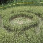 Kades sepakat LAPAN tak perlu cek crop circle Magelang