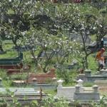 PERMAKAMAN -- Suasana di salah satu sudut permakaman Bonoloyo, Solo. Kota Solo saat ini menghadapi krisis penyediaan lahan permakaman, sementara Raperda Permakaman akan dibahas mulai Senin (23/5) ini. (JIBI/SOLOPOS/dok)