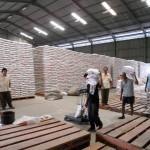 PERTANIAN BOYOLALI : Tahun Ini Diprediksi Surplus Beras Capai 60.000 Ton