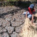 Dampak kekeringan, persediaan pangan warga menipis