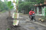 JALAN RUSAK: Warga Tanami Pohon Pisang