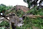 BENCANA PONOROGO : Pohon Pinus Perhutani Roboh, 1 Rumah Hancur dan 1 Bocah Terluka