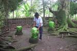 BERSEJARAH -- Batu-batu bertumpuk yang diyakini merupakan bagian situs peninggalan masa Mataram Hindu ini menarik dikunjungi sebagai objek wisata sejarah, meski patut disayangkan situs ini kurang terpelihara dan mendapat perhatian dari pihak berwenang. (JIBI/SOLOPOS/Farida Trisnaningtyas)