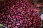 PERTANIAN SRAGEN : Ingin Harga Bawang Merah Stabil, 80 Petani Dirikan Asosiasi