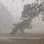 HUJAN DERAS JOGJA : Pohon Tumbang Sempat Bikin Macet