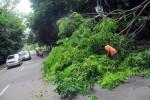 BENCANA SOLO : Waspadai Pohon Tumbang di 6 Jalan Utama Solo, Ini Lokasinya