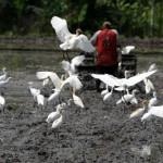 Lahan Pertanian di DIY Mashi Tersisa, Bagaimana Penggunaannya?