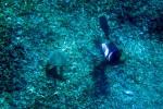 Ilustrasi keindahan bawah permukaan laut (JIBI/Solopos/Dok.)
