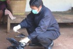 FLU BURUNG: Warga Diminta Waspada Flu Burung