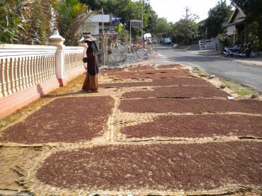 MENJEMUR CENGKEH-Pelaku Pengering cengkeh Desa Jatipuro, Ny Supono, menjemur cengkeh di depan rumahnya, Rabu (6/6/2012). Beberapa pengering cengkeh di Kecamatan Jatipuro mengeluhkan harga komoditas cengkeh kering yang menurun jika dibandingkan tahun lalu. (JIBI/SOLOPOS/Dian Dewi Purnamasari)