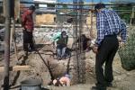 PASAR DEPOK: Pembangunan Taman Pasar Burung Depok Terganjal