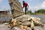 DIY Menjadi Pasar Potensial Kepiting