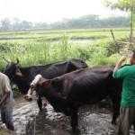 WISATA: Bali Ndesa ke Kampung Batik Mangunan