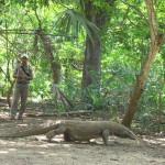 WISATA: Pulau Komodo nan Eksotis