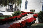 Fans Kirim 10.000 Mawar ke Makam Michael Jackson