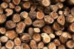 Polres Wonogiri Tangkap 5 Terduga Pelaku Illegal Logging
