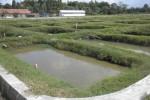 Kolam-kolam lele di Desa Tanjungsari, Banyudono, Boyolali. Foto diambil beberapa waktu lalu (Oriza Vilosa/JIBI/Solopos)