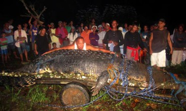 Lolong saat ditangkap (guardian.co.uk)