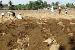 Sejumlah petani tengah menanam singkong bioetanol di Kelurahan Mojosongo, Kecamatan Mojosongo, Senin (16/7/2012). Lahan seluas 50 hektare dipersiapkan untuk budidaya tanaman ini.