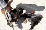 Ini Penyebab Puluhan Ayam di Rejomulyo Kota Madiun Mati Mendadak