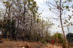 Taman Sekartaji Solo (Dok/JIBI/Solopos)