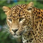 Taman Nasional Madidi Punya Koleksi Flora & Fauna Terbanyak di Dunia