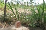 Patok penanda tanah yang ditukar guling di wilayah Desa Kemiri, Mojosongo, Boyolali, yang diambil beberapa waktu lalu. tanah yang menjadi lokasi relokasi kantor Pemkab Boyolali itu hingga kini masih dipermasalahkan karena dinilai ada kejanggalan dalam prosesnya. (JIBI/SOLOPOS/Yus Mei Sawitri)