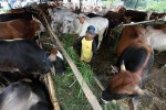 IDULADHA 2017 : Di Bantul, Harga Kurban Naik 30%