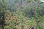 Populasi Kera di Gunung Kelir Meningkat, Warga Resah