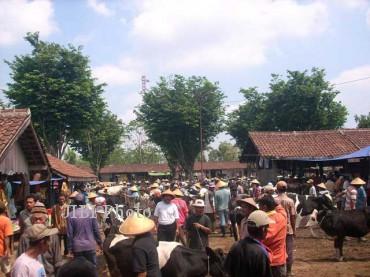 Aktivitas perdagangan sapi di Pasar Hewan Sunggingan. Harga sapi tiap ekor anjlok Rp500 ribu – Rp1 juta. Foto diambil Minggu (9/12/2012). (JIBI/SOLOPOS/Mahardini Nur Afifah)