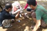 SERANGAN AI: Ribuan Bebek di Karanganyar Diserang AI