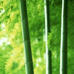 Ilustrasi bambu (deshow.net)