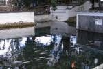 Mata air cokro tulung, Klaten (JIBI/SOLOPOS/Dok)