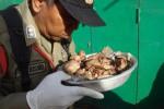 Salah seorang anggota tim razia gabungan memeriksa hasil temuan berupa daging ayam tiren yang disita dari seorang pedagan di pasar tradisional, Senin (10/12/2012).(JIBI/SOLOPOS/Septhia Ryanthie)