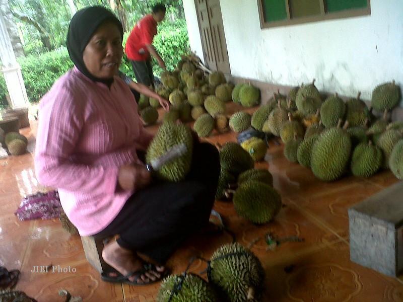 Sunarni menunjukkan durian di Dukuh Bagor, Desa Kanoman, Karangnongko, Klaten, yang dikenal kampung durian, Jumat (25/1/2013). (Moh Khodiq Duhri/JIBI/SOLOPOS)