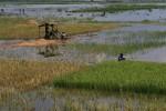 BANJIR KLATEN : Tanggul Jebol, Puluhan Ha Sawah Cawas Kebanjiran