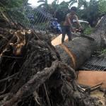 Sebuah Rumah di Bantul Rusak akibat Tertimpa Pohon Tumbang