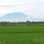 PERTANIAN BOYOLALI : Balitbang Kenalkan Pestisida Nabati