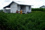 TRANSMIGRASI SOLO : Tiga Transmigran Berstatus Pulang Paksa akan Ditawari ke Takalar Sulawesi