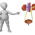 Ilustrasi kesehatan ginjal (JIBI/Dok)