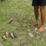 beberapa tikus yang berhasil ditangkap petani.dok
