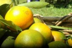 Konsumsi Jeruk dan Olahraga Obati Flu Lebih Cepat
