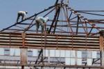 Pekerja sedang melakukan pembongkaran atap bekas pabrik es Saripetojo, Purwosari, Solo, beberapa waktu lalu. Bangunan tersebut akan segera dirobohkan dan dibangun hotel. (JIBI/SOLOPOS/ Sunaryo Haryo Bayu/dok)