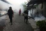 KASUS DBD SLEMAN : Penyebaran Nyamuk ber Walbachia Perlu Dilanjutkan