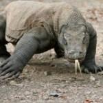 Google Bertanya, Dimana Lokasi Taman Nasional Komodo?