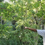 PENATAAN GUNUNGKIDUL : Habitat Monyet Terancam Masifnya Pembangunan