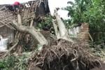 Ilustrasi pohon roboh akibat angun kencang (JIBI/Solopos/Dok.)
