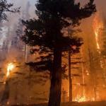 6 Hari, Kebakaran Hutan California Tewaskan 40 Orang