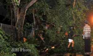Ilustrasi pohon tumbang. (JIBI/Solopos.com/Dok.)